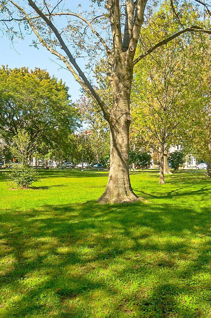 352-front-st-w-fly-condos-king-west-toronto-local-park-nature