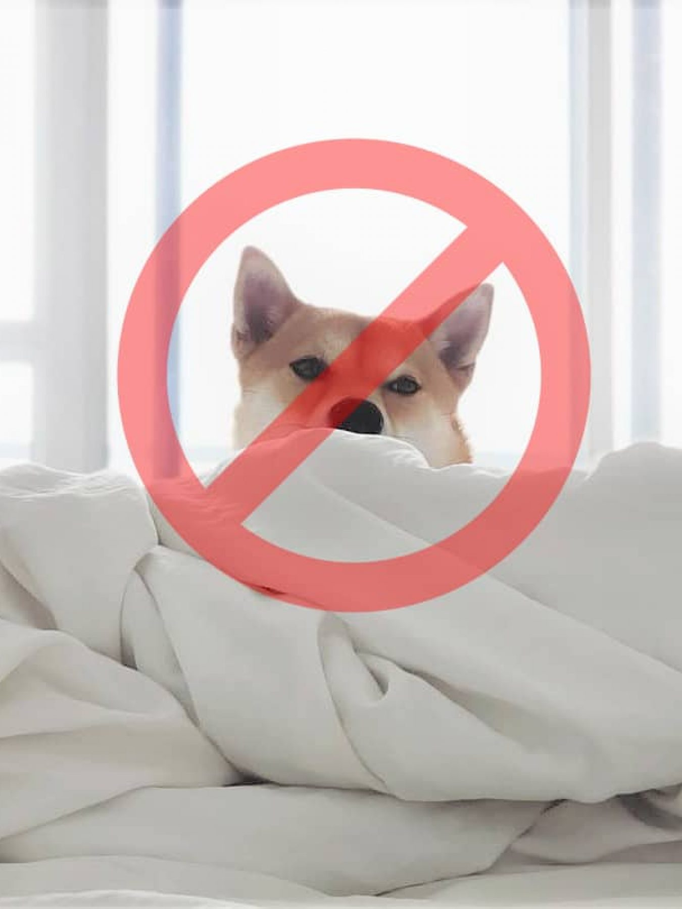 no-pets-allowed-lifestyle